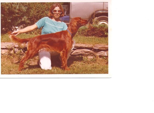 My first Irish Setter, Kahula at 10 months, she won the puppy match that day, Breeder/Judge was Brain Taylor Aug. 1977.